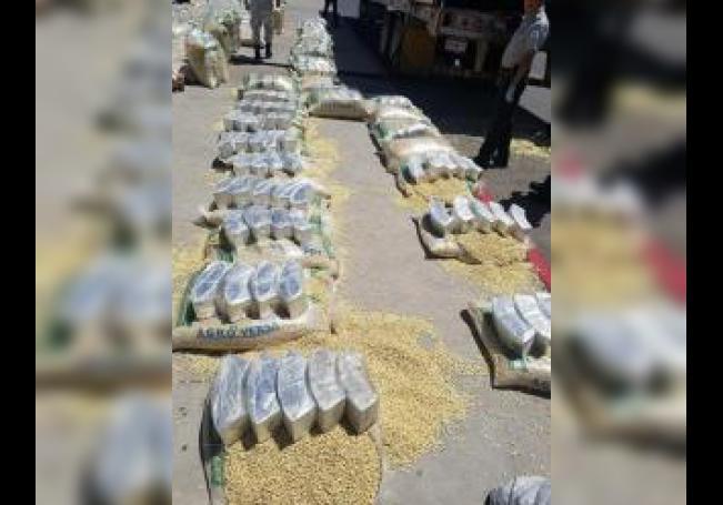 Fotografía cedida este jueves por la Guardia Nacional de México que muestra un cargamento de droga decomisado tras ser encontrado en costales de maíz que transportaba un camión, en una carretera de Ciudad Juárez, en el estado de Chihuahua (México). EFE/Guardia Nacional de México/SOLO USO EDITORIAL /NO VENTAS