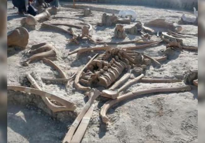 Fotografía cedida este lunes por el el Instituto Nacional de Antropología e Historia, que muestra los fósiles de un mamut, en la Ciudad de México(México). EFE/INAH /SOLO USO EDITORIAL