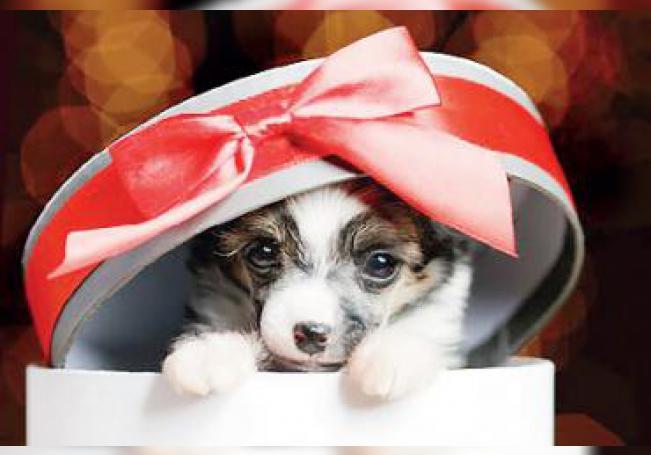 Llaman a evitar comprar y regalar mascotas en esta temporada y a lo largo del año.
