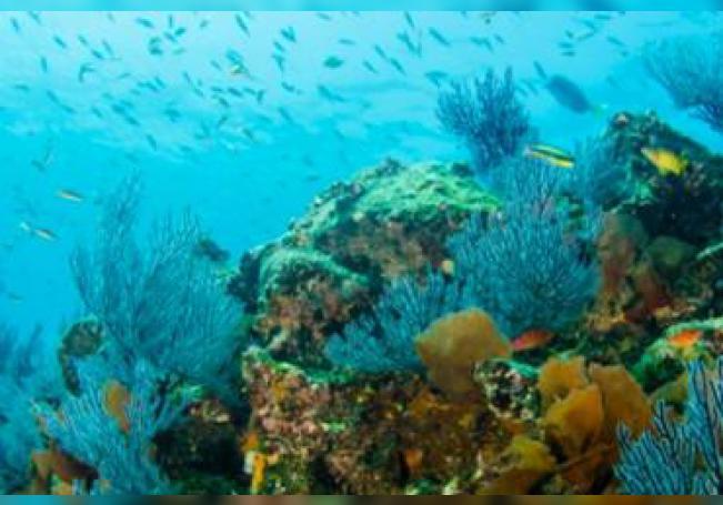 Investigadores encontraron cinco nuevos arrecifes en el Golfo de México, en la zona del oriental de Veracruz