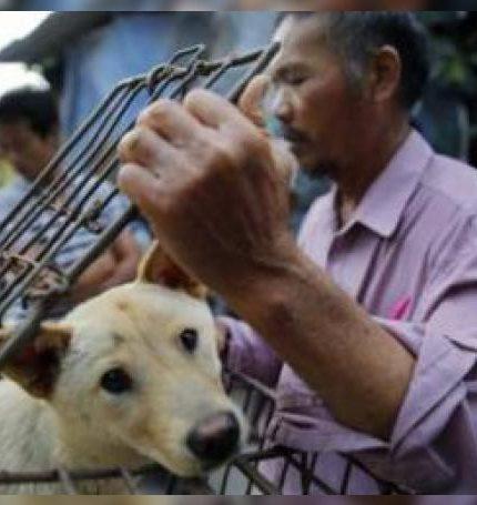 La decisión fue celebrada por las organizaciones animalistas.