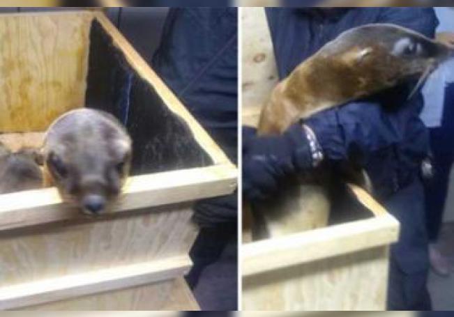 Los animales fueron rescatados por los uniformados.