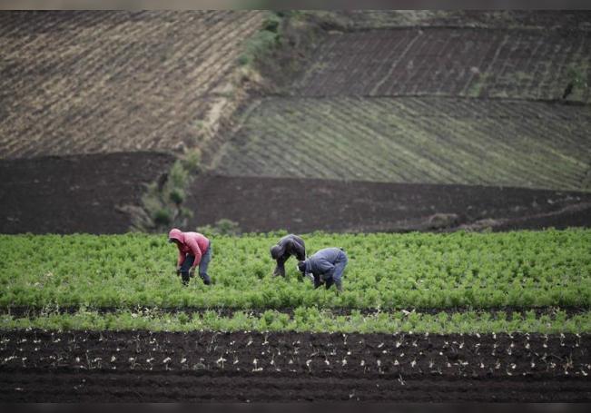 Imagen de archivo de unos campesinos que trabajan en sus parcelas, 29 de octubre de 2019, en la zona de Tierra Blanca de Cartago al este de San José (Costa Rica). EFE/Jeffrey Arguedas