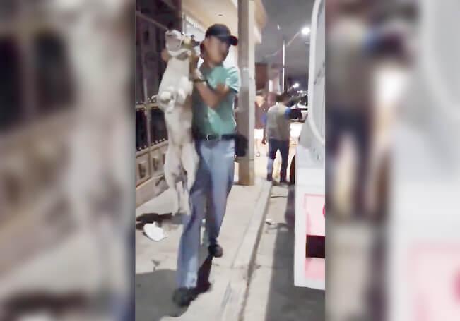 La denuncia fue levantada ante la Fiscalía por maltrato animal.