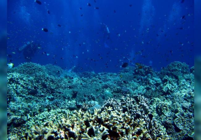 Los océanos serán claves para asegurar para el abastecemiento mundial en 2050