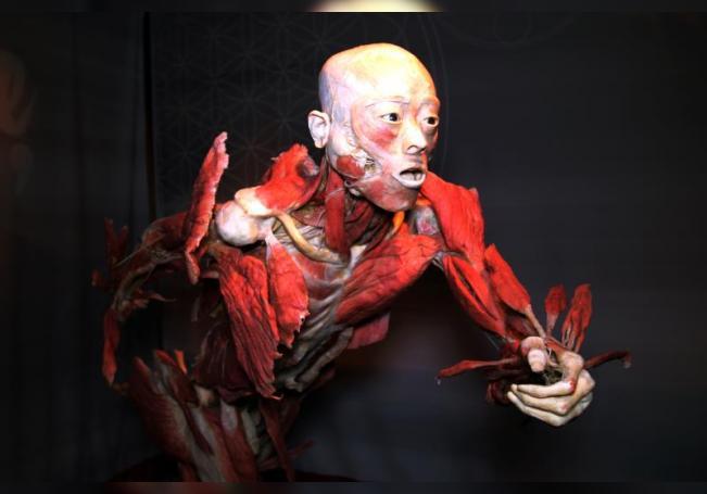 """Vista de un cuerpo humano exhibido en la exposición """"Real Bodies"""" el 6 de septiembre de 2020 en Las Vegas, Nevada (EE.UU.). EFE/Adriana Arévalo"""