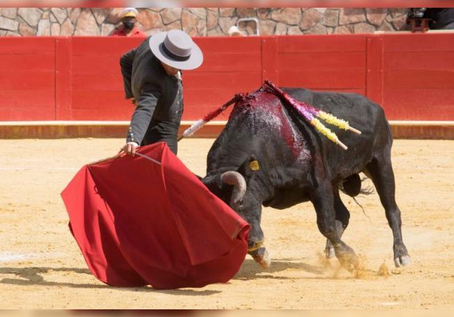 El mexicano Alejandro Adame lidia un toro hoy, durante la corrida de toros en linea, en la plaza de toros de Cinco Villas, en Santiago Cuautlalpan estado de México (México). EFE/ Oscar Mir Reyes