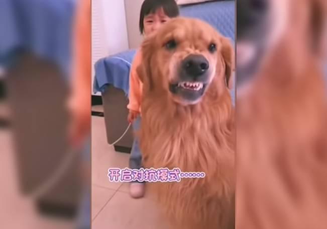 Imágenes muestran la tierna amistad de una niña y su perro